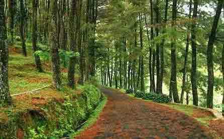 curug nangka, tempat wisata alam di boror