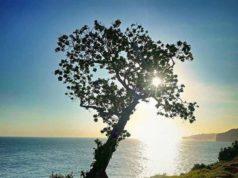 wisata pantai kesirat